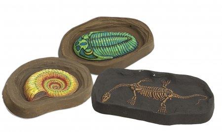 Fossils Paleo Lab