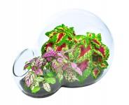 Color Explosion Double Bubble