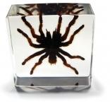 Tarantula Desk Decoration