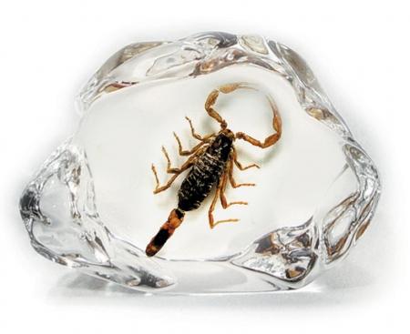Scorpion Desk Decoration