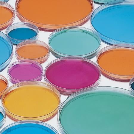 Economical Glass Petri Dishes