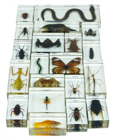 Studies In Evolutionary Milestones And The Animal Kingdom